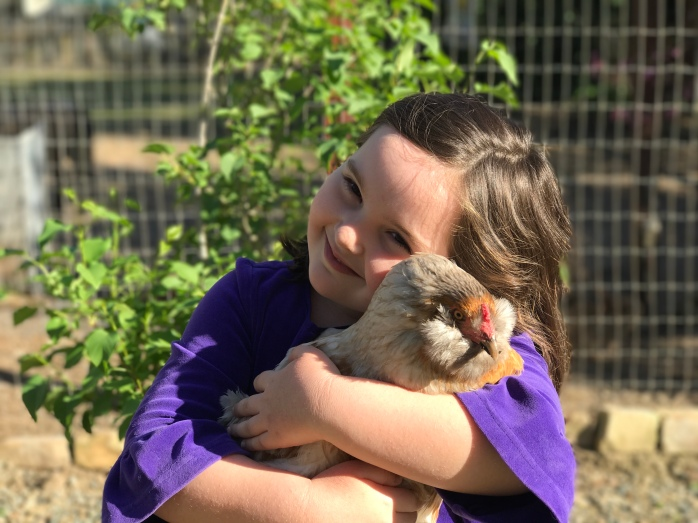 My Little Chickens – Page 7 – Stories from an urban farm